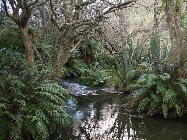 NZ wilderness.JPG