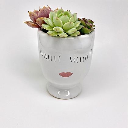 Little Lady + Succulents