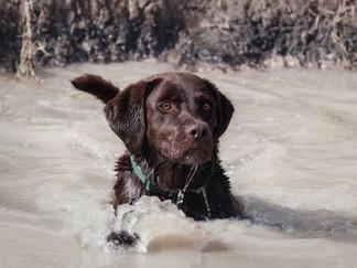 Fotografía de perro nadando en Bogotá