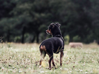 Fotografía de perros en Bogotá