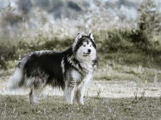Fotografía de perro en Bogotá