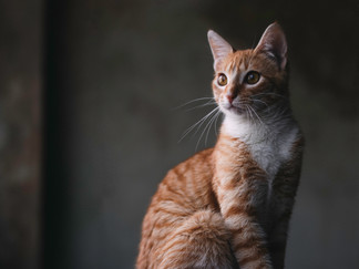 Fotografía de gato en Bogotá artística