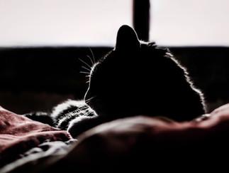 Fotografía de gato durmiendo en Bogotá