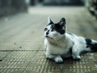 Fotografía de gato en Bogotá acostado