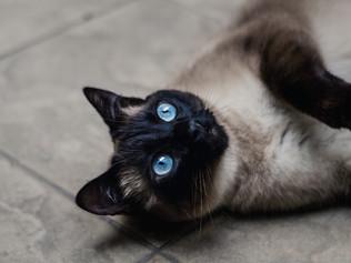 Gato jugando  Fotografía de mascotas Bogotá