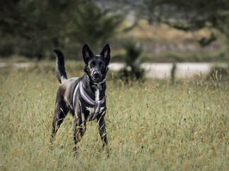 Fotografía de perro en Bogotá en la naturaleza