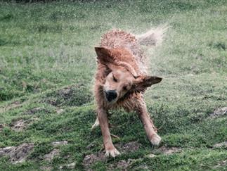 Fotografía de perros en Bogotá - Perro sacudiéndo agua