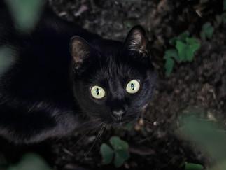 Fotografía de gato en Bogotá