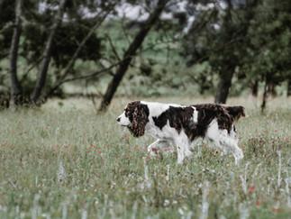 Fotografía de perro caminando en Bogotá en la naturaleza
