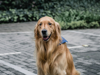 Fotografía de perro sentado en Bogotá