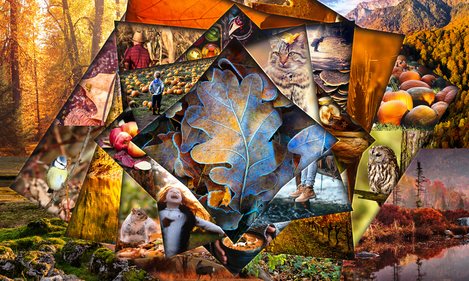 Celebration of Autumn Collage