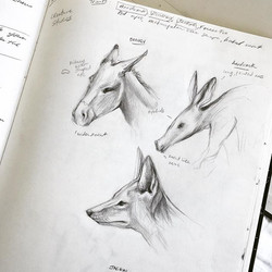 notes and animal studies for an Egyptian god character