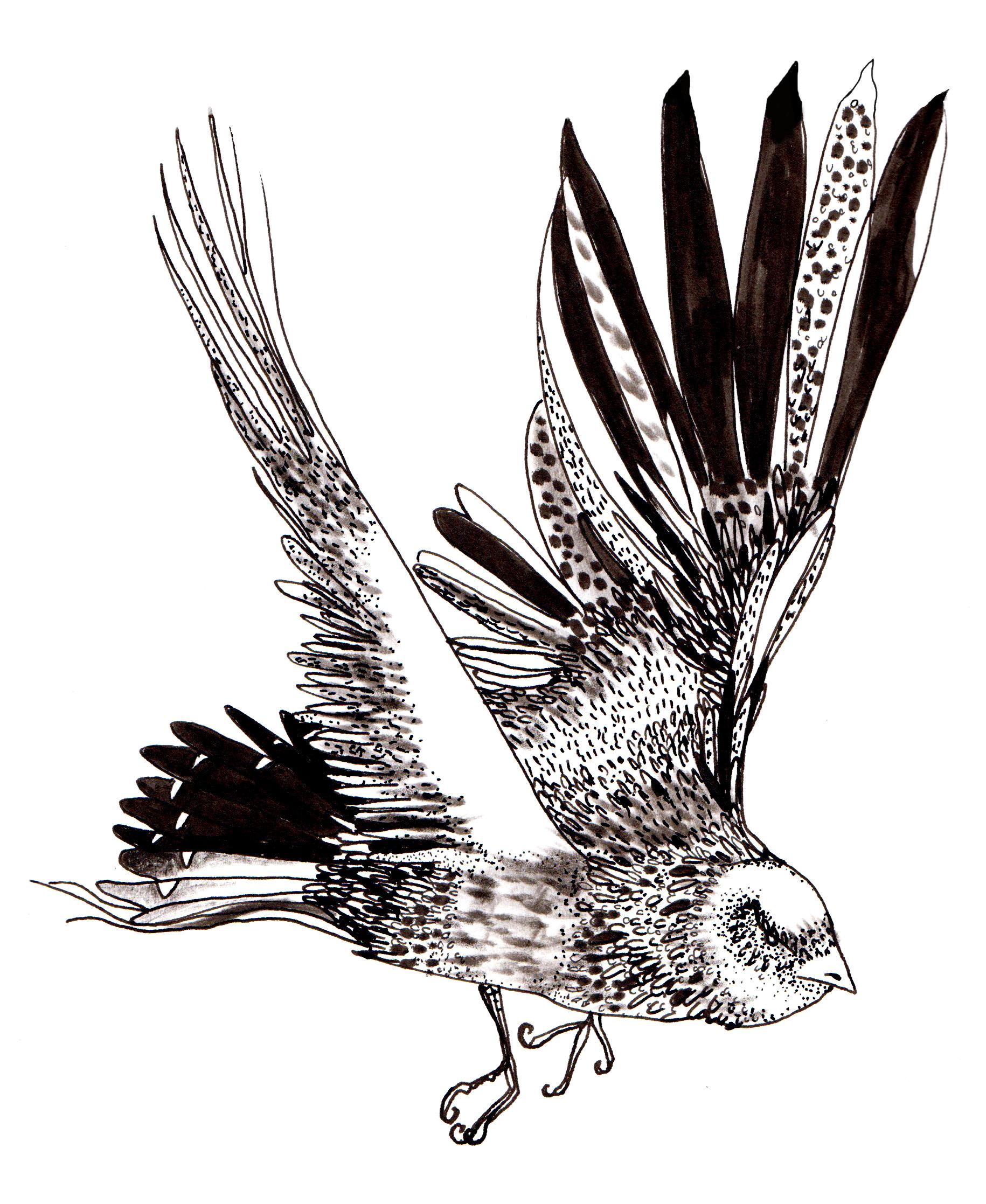 Bird 1 edit 1