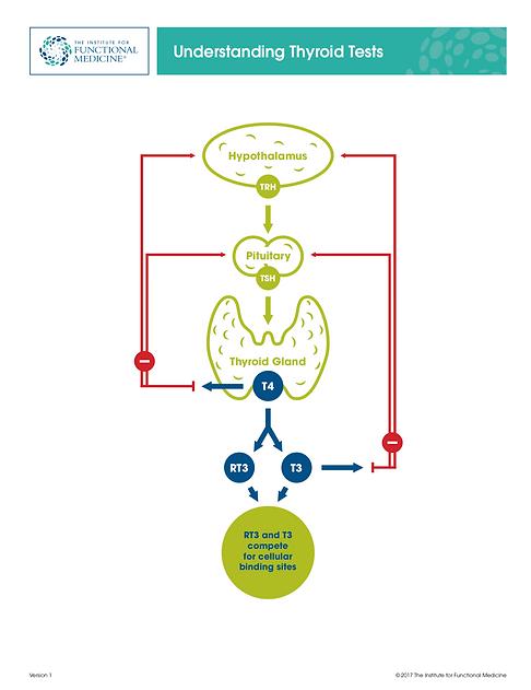 Understanding Thyroid Tests - Diagram_v2