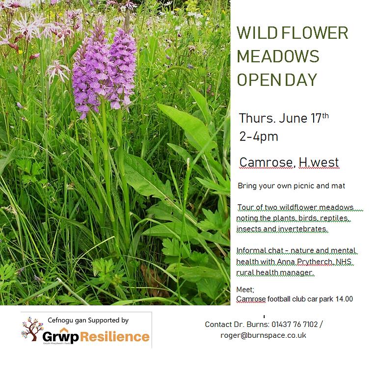 Wildflower meadow Open Day, Camrose
