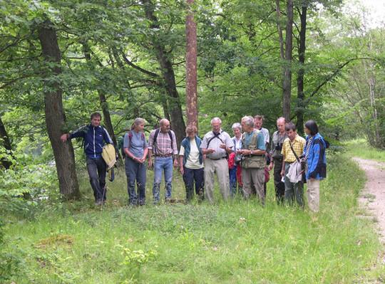 Den Hügelklee (Trifolium alpestre L.) zu Füssen