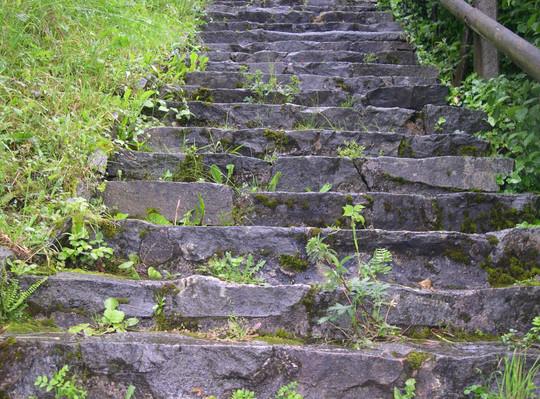 Zur Ruine Laufenburg und dem Grauen Fingerkraut (Potentilla inclinata Vill.)