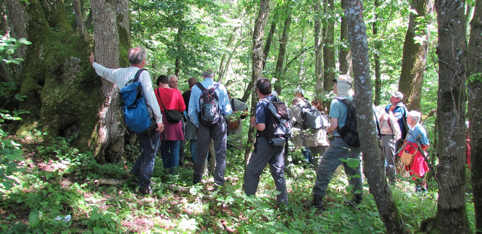 Naturliebende Mitglieder oberhalb der Gipsgrube Ehrendingen