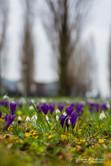 Flowers-Amsterdam.jpg