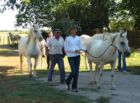 Allons chercher les chevaux au pré!