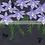 Thumbnail: Pollination