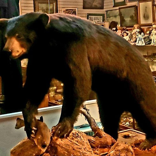Statue of Black bear catching fish with great detail