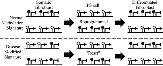 iPS Figure 3.PNG