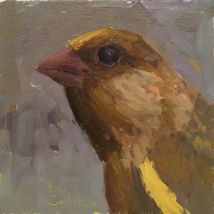 Yellow Bird, 8x8 oil by Sandi Hester