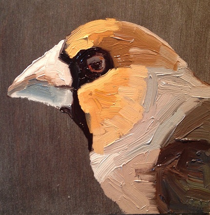 Finch, 8x8 oil by Sandi Hester