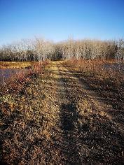 2020 Trail