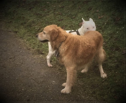 chiens qui se reniflent