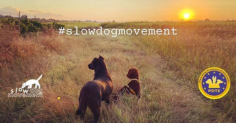 slow dog movement