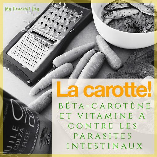 carotte vermifuge