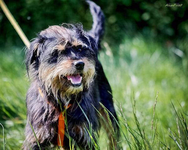 Alix Pilet éducatrice comportementaliste canin