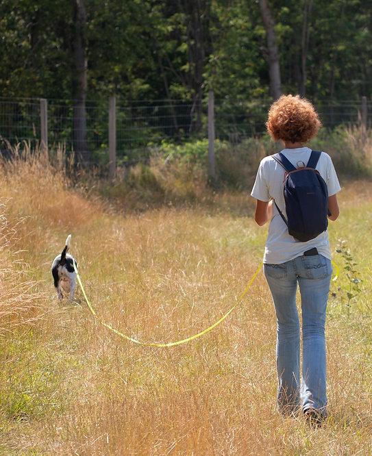 My Peaceful Dog. Promener son chien
