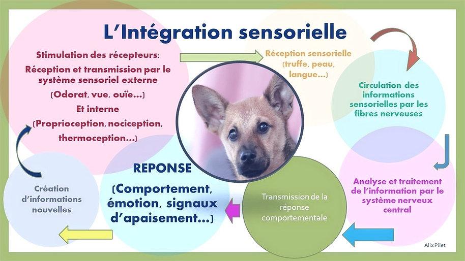L'intégration sensorielle