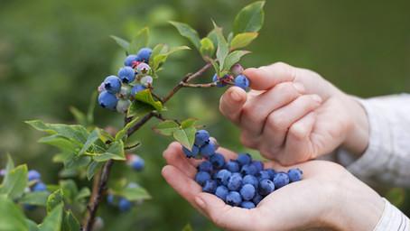 El valor de las frutas de temporada