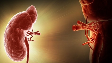 L'équipe du Pr. Giral invalide le rôle des anticorps anti-AT1R dans le rejet de greffe rénale