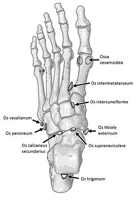 Accessory ossicles of foot