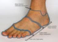 Regia of foot