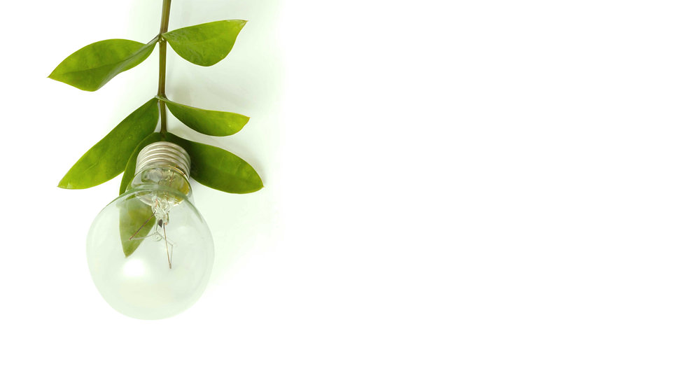 Cleantech bulb sustainably growing from a plant that hangs downward