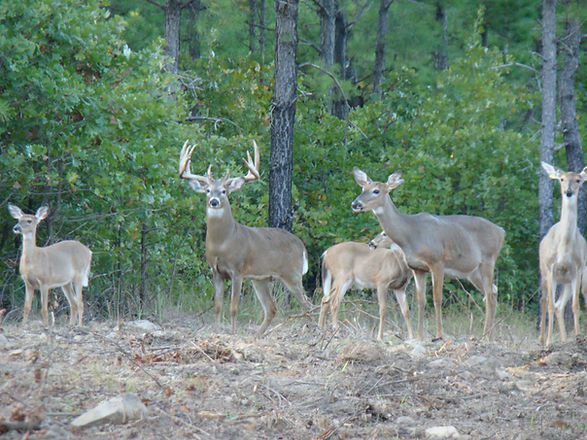 Southeastern Okla Realty listing offering trophy hunting & fishing in San Bois Mountains in southeastern Oklahoma