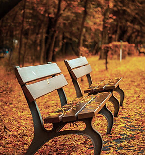 Bench on Autumn Leaves
