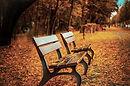 Lavice na Autumn Leaves