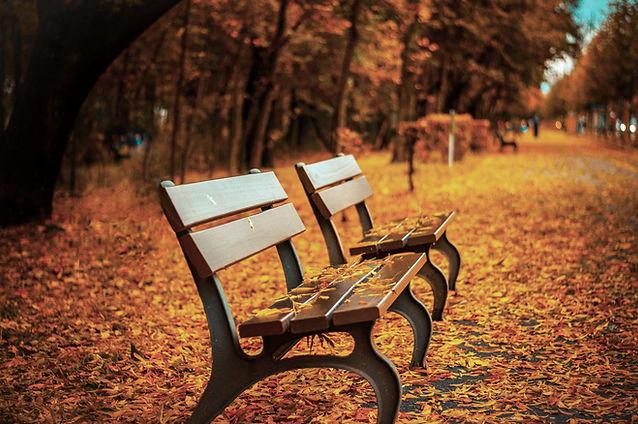 Banc sur les feuilles d'automne