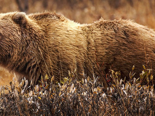 FWP reminder: Be bear aware when recreating outdoors