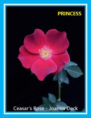 class 12 ceasar's rose joanna deck.jpg