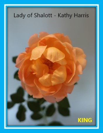 class 9 lady of shalott kathy harris.jpg