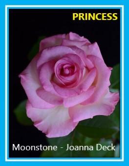 class 1 moonstone joanna deck.jpg