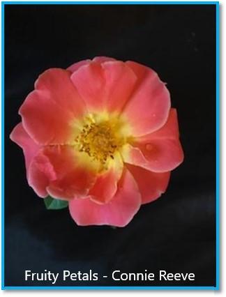 class 7 fruity petals connie reeve.jpg